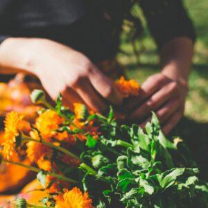 Aromaterapia Holística